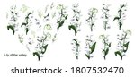 hand drawn set with flowers of... | Shutterstock .eps vector #1807532470