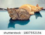 Two Cats Are Basking On The...