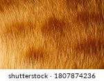 Fox Fur Close Up. Redhead...