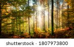Sunny Forest Scenery In Autumn...