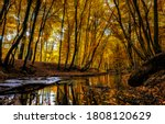 Autumn Forest Creek Landscape....
