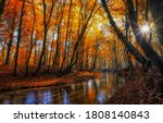 Autumn Forest River Sunbeam...