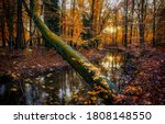 Autumn Forest River Creek View...