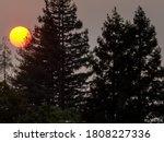 Sun Setting Behind Pine Trees ...
