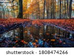 Autumn Leaves In Autumn Water....