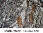 TREE CRUST,  (HDR Efex Pro 2)