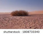 Desert Plants In The Empty...