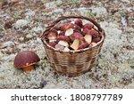 A Wicker Basket Full Of Bolete...