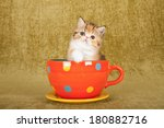 Stock photo cute kitten sitting inside large orange polka dot cup on olive green background 180882716