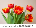 Five Red Tulip Flowers In...