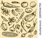vegetables etching  vintage... | Shutterstock .eps vector #1809046750