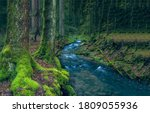 Mossy forest river creek view. River creek in forest. Forest creek stream view. Creek in deep forest