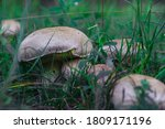 A Selective Focus Of Group Of...