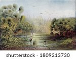 Upper Nile Landscape With...