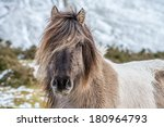A Portrait Of A Horse On A...
