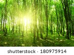 forest trees. nature green wood ... | Shutterstock . vector #180975914