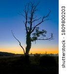 Tree Silhouette Landscape On...