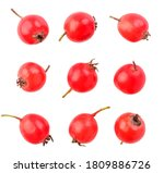 Set Of Hawthorn Berries On A...