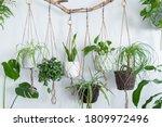 Six jute twine macrame plant...