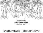 sketch floral decorative set.... | Shutterstock .eps vector #1810048090