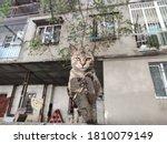 Feral Cat Sitting In The Yard....