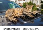 The Cat Lies On The Hood Of A...