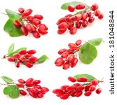 Collections Of Barberry With...