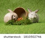 Two Cute Baby Bunny Rabbit On...