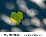 Yellow Leaf Heart Lies On The...