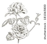 hand drawn rose . raster version | Shutterstock . vector #181065800