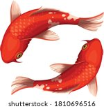 Red And White Koi Crap Vector...