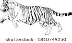 tiger drawn with ink from the...   Shutterstock .eps vector #1810749250