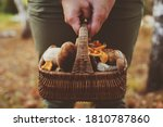 Picking Wild Mushrooms In...