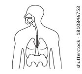 human respiratory system or... | Shutterstock .eps vector #1810846753