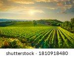 Vineyard At Sunset. Sangiovese...