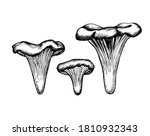 vector sketch chanterelles... | Shutterstock .eps vector #1810932343