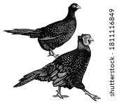 two pheasants isolated on a... | Shutterstock .eps vector #1811116849