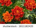 The Beautiful Nature Pattern O...