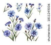 hand drawn watercolor...   Shutterstock . vector #1811245036