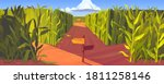 cornfield with wooden road... | Shutterstock .eps vector #1811258146