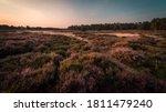 Heath Landscape In Ede The...