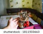 Funny Kitten In Pink Gift....
