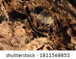 A Close Up Of Dolomite Rock In...