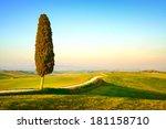 Tuscany  Lonely Cypress Tree...