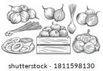 onion outline drawn monochrome... | Shutterstock .eps vector #1811598130