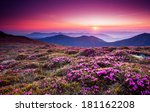 magic pink rhododendron flowers ... | Shutterstock . vector #181162208