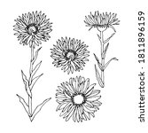 Set With Alpine Aster Flowers...