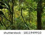 Brazil Nature. Jungle Flora In...