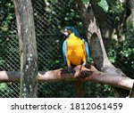 Bright Blue Hyacinth Macaw ...