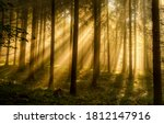 Forest Trees Sunbeams In...